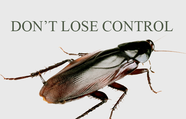 Pest Control - Peterborough